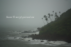 the coconut trees trees bend with the wind