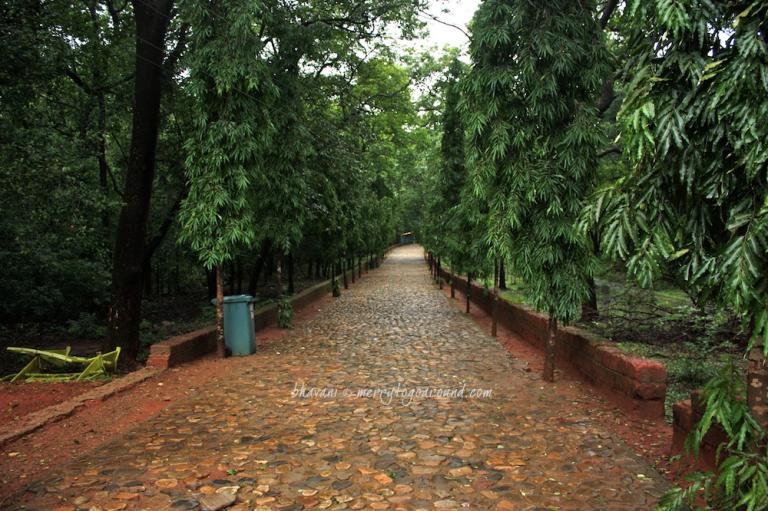 cobbled stones and ashoka trees