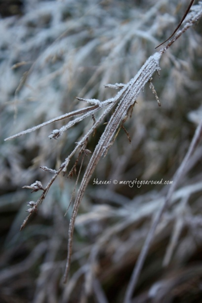 frost bitten... 1
