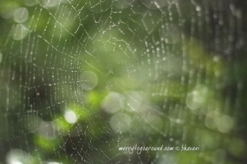 rain, bokeh and a spider's web!