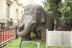 elephanta's elephant @ bhau daji lad museum