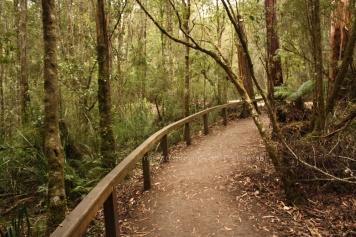 Mait's Rest - a rainforest to walk about.