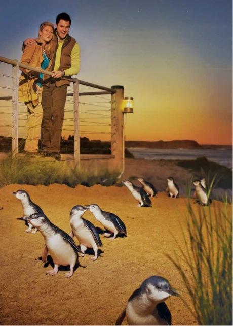 penguin parade cover