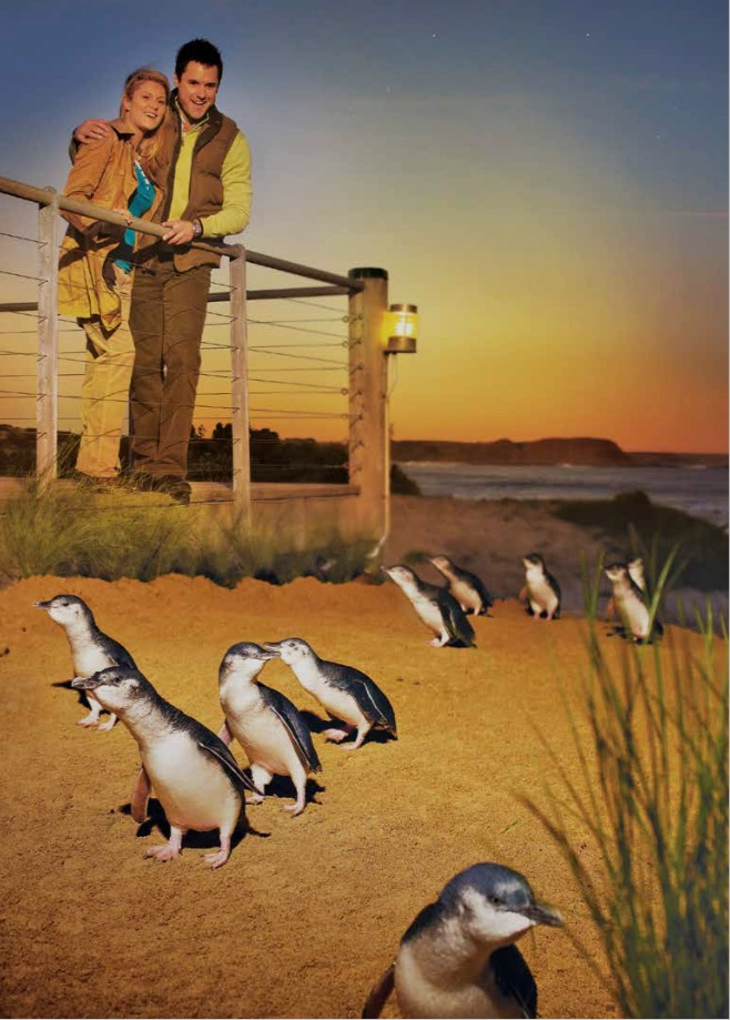 penguin parade cover